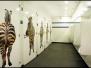 Geprinte folie op deuren -WTC Den Haag